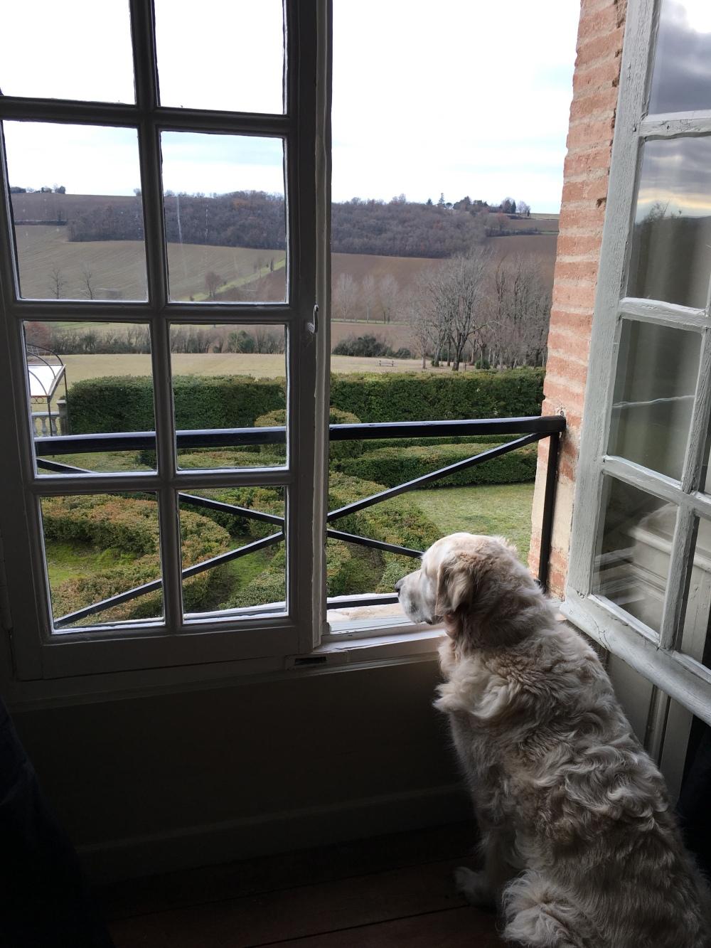 Bertie taking in his amazing view!